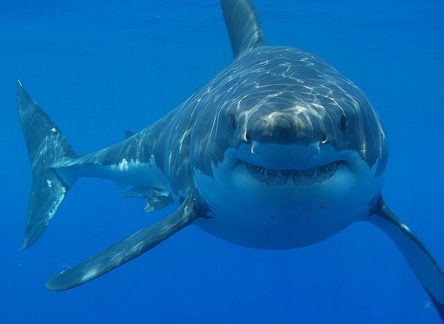 shark-diving-cape-town