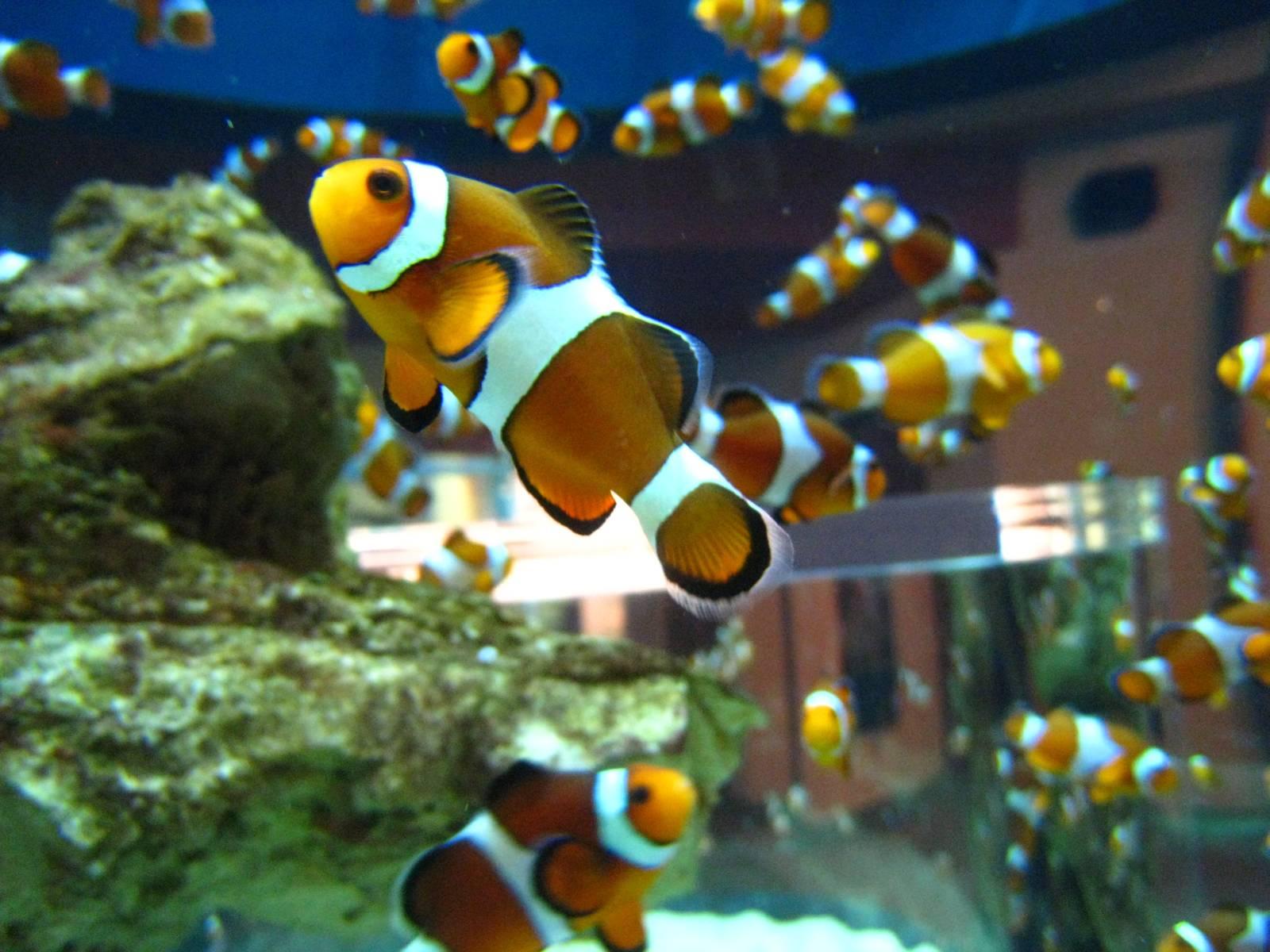 Freshwater aquarium fish cape town -  Cape Town South Africa Two Oceans Aquarium Mariner Guesthouse Two Oceans Aquarium Mariner
