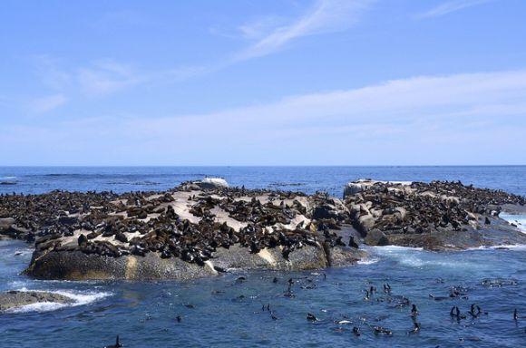 nico_van_blerk_seal_island_flickr__580_384_80_s