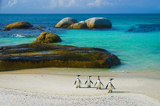 Penguins. Mariner Guest House - Luxury affordable holiday accommodation in Simon's Town.