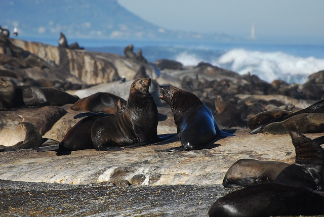 Seal Island Trips.  Visit Seal Island - trips leaving from Simon's Town. Mariner Guest House - luxury holiday accommodation in Simon's Town